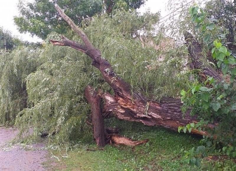 Desde el área de Defensa Civil, cortaron árboles, recogieron las ramas caídas y desobstruyeron las calles de la ciudad.