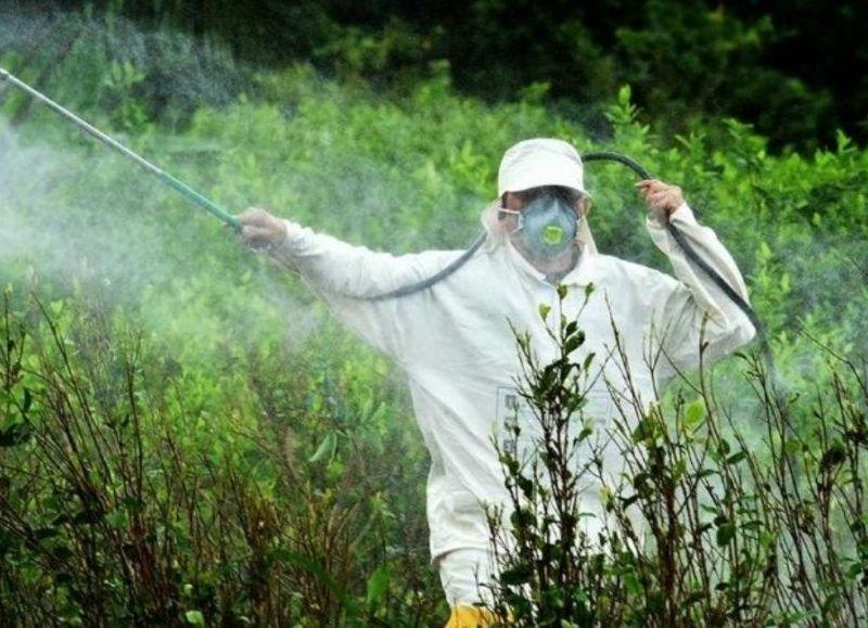 A pesar del peligro que significa para los ciudadanos, Monsanto continúa utilizando glifosato.