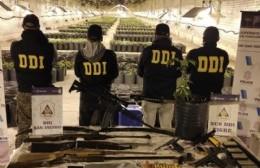 San Antonio de Areco: histórico golpe al narcotráfico con el secuestro de 4.000 plantas de marihuana