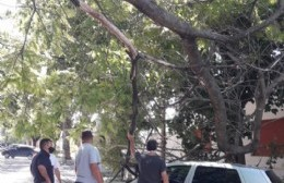 Las ramas de un árbol cayeron en un vehículo