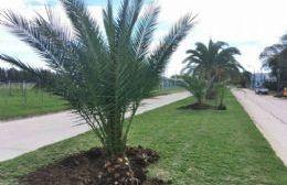 Personal municipal trabaja para mejorar los espacios verdes.