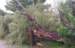 Tras el temporal, la Municipalidad salió a la calle a ayudar a los vecinos